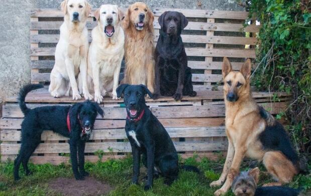Clases de educación canina