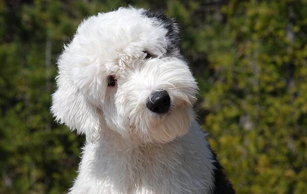 Corte, lavado y peinado para tu perro