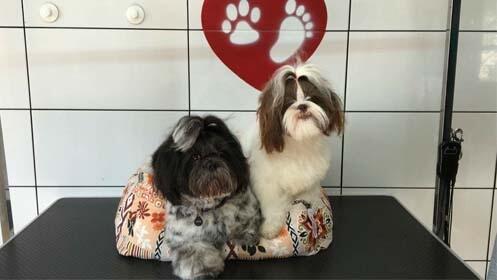 Sesión de belleza para tu perro o estancia en hotel canino