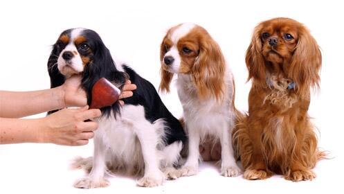 Presume de perro: Sesión peluquería canina